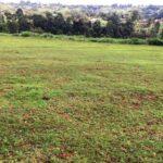 land-in-kiambu1